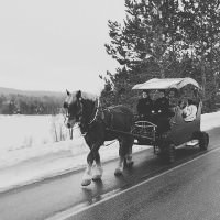 horse and carriage muskoka winter wedding